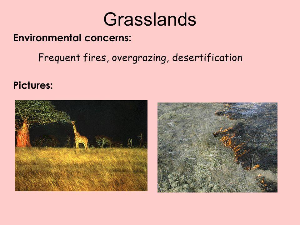 Grasslands Environmental concerns: