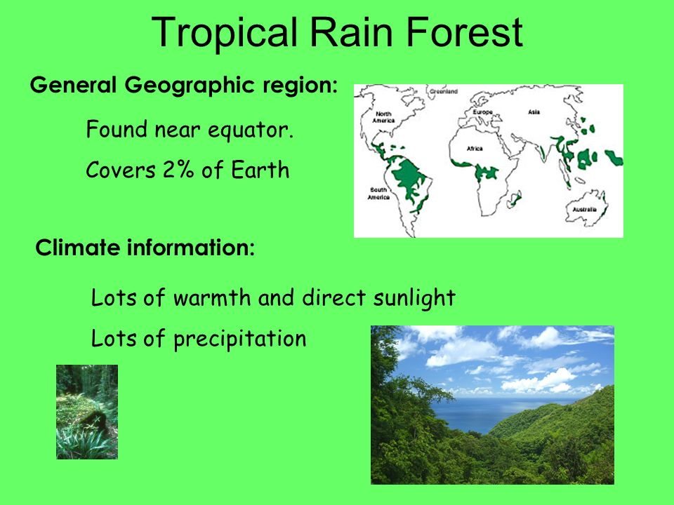 Tropical Rain Forest General Geographic region: Found near equator.