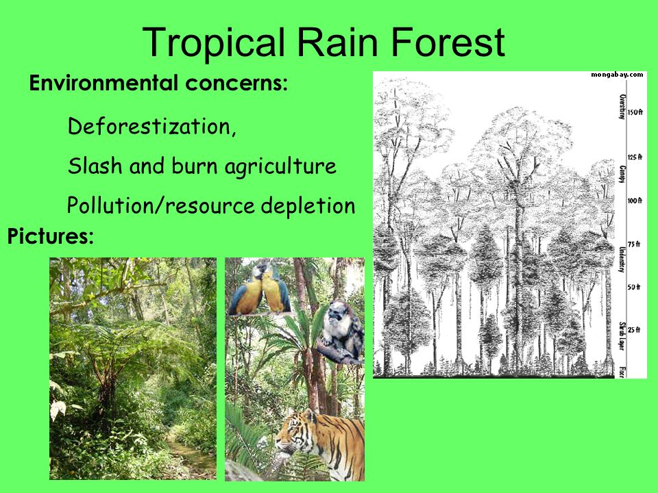 Tropical Rain Forest Environmental concerns: Deforestization,