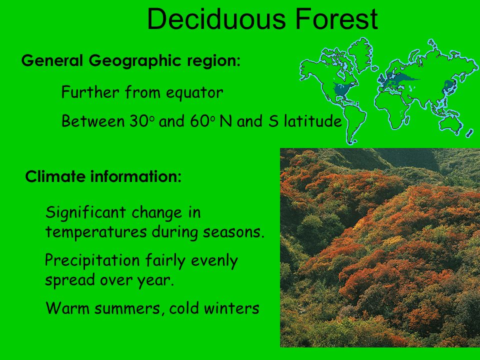 Deciduous Forest General Geographic region: Further from equator
