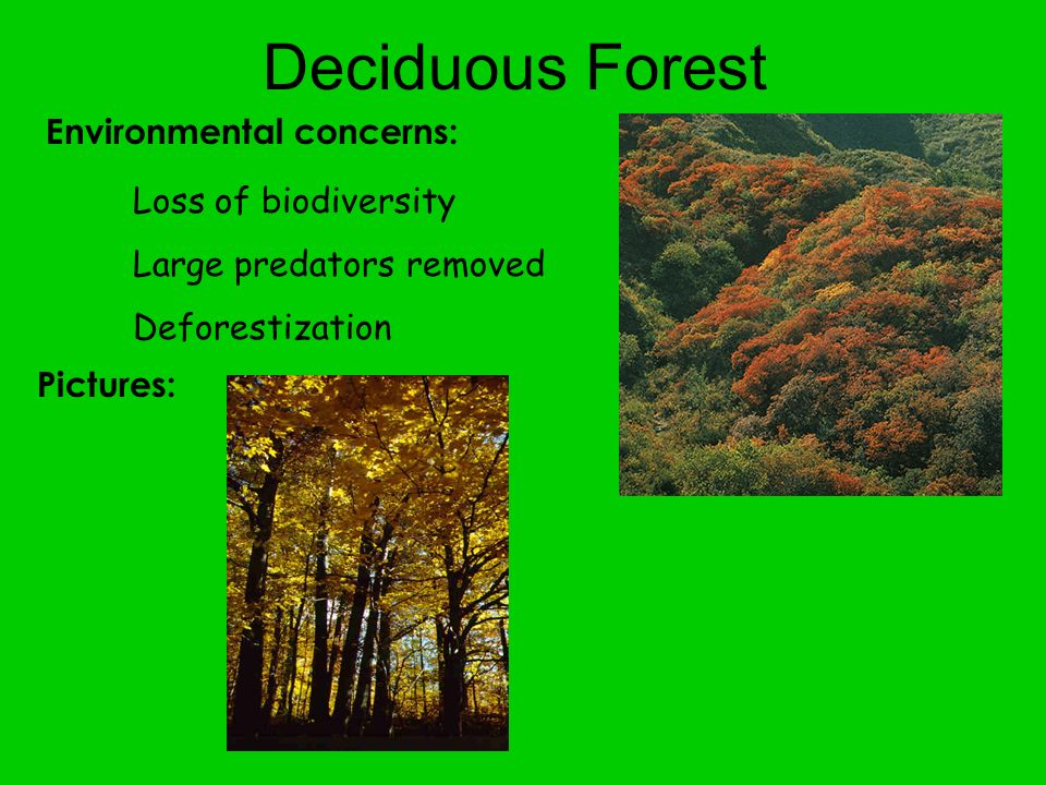 Deciduous Forest Environmental concerns: Loss of biodiversity