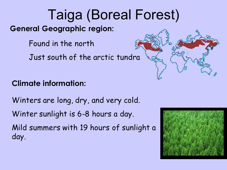 Taiga (Boreal Forest) General Geographic region: Found in the north