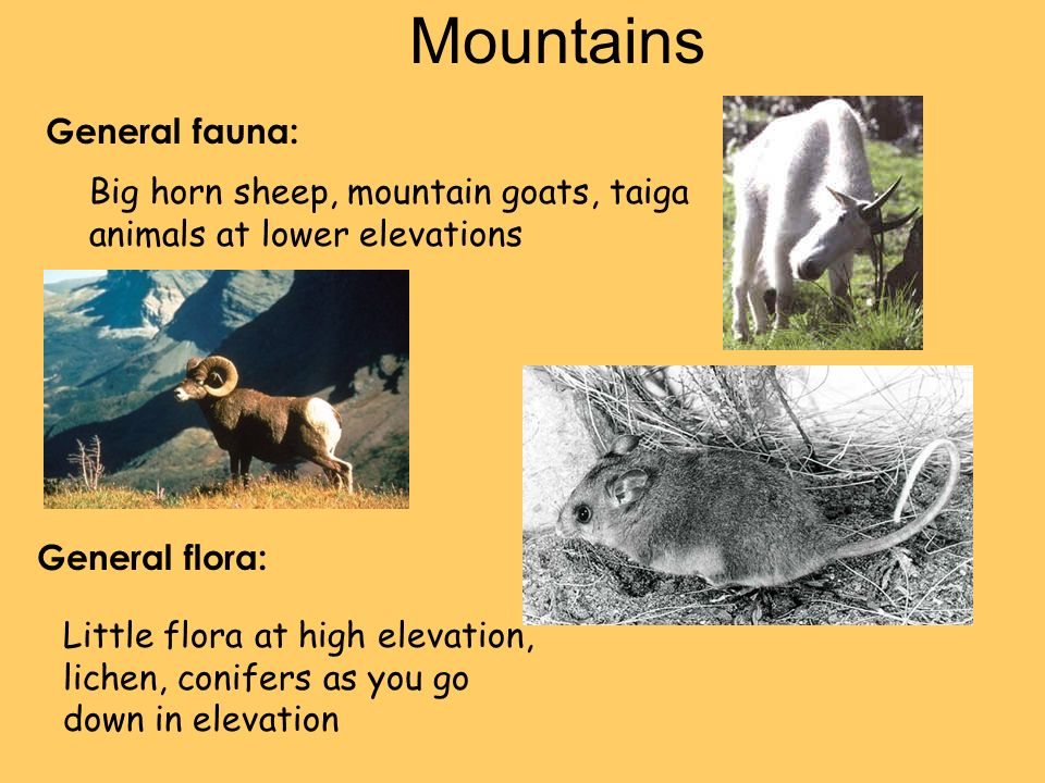 Mountains General fauna: