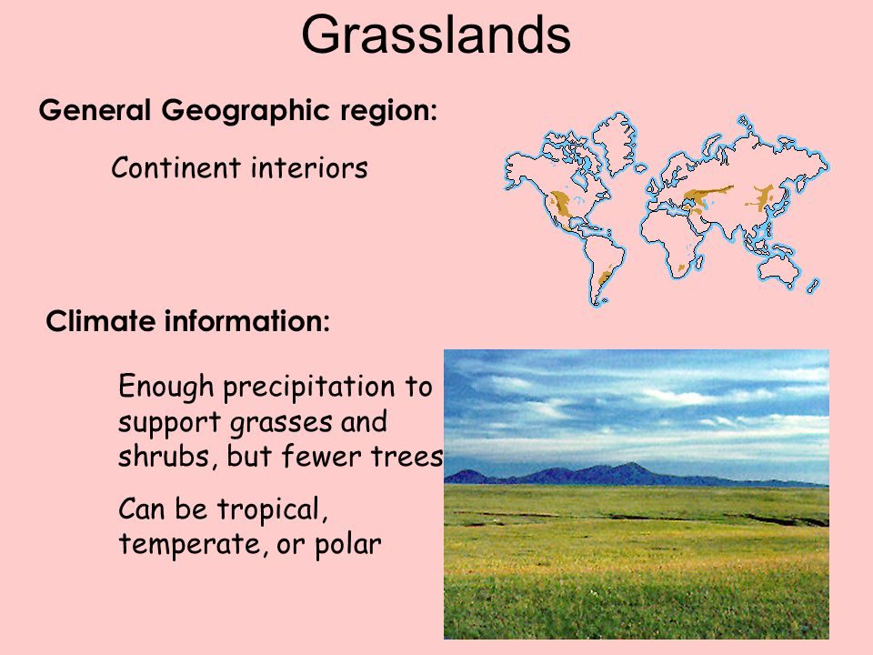 Grasslands General Geographic region: Continent interiors
