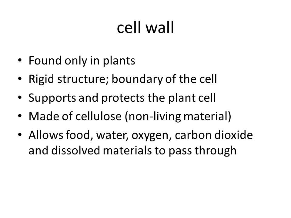 cell wall Found only in plants Rigid structure; boundary of the cell