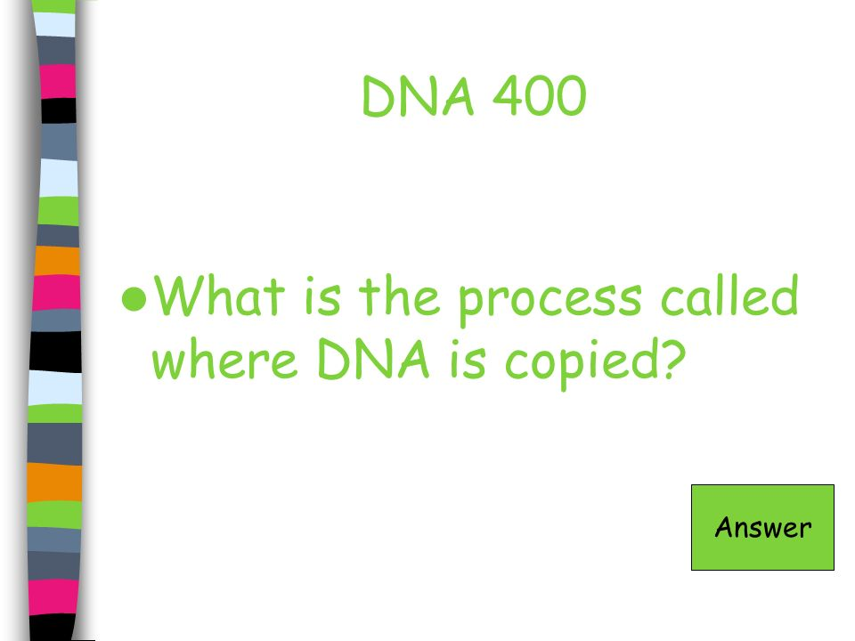 What is the process called where DNA is copied