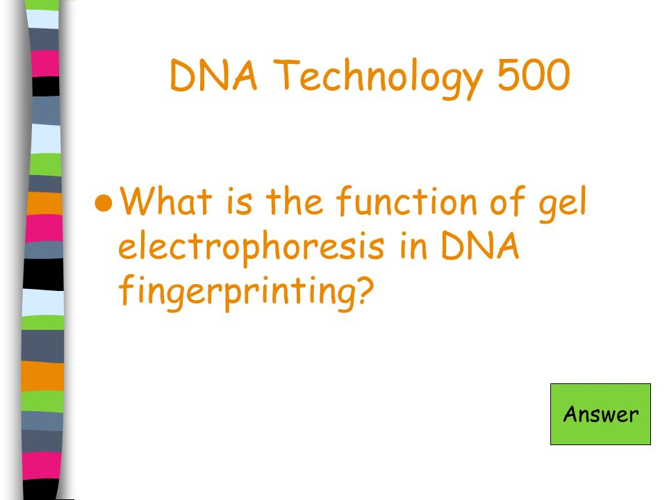 DNA Technology 500 What is the function of gel electrophoresis in DNA fingerprinting Answer