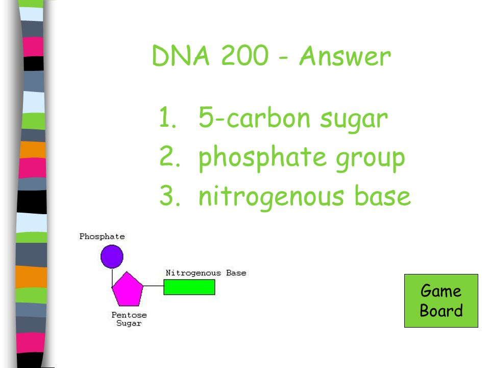 DNA 200 - Answer 5-carbon sugar phosphate group nitrogenous base Game