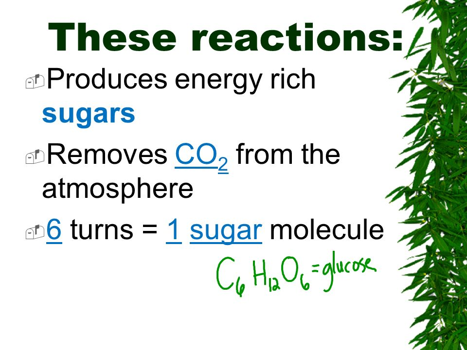 These reactions: Produces energy rich sugars