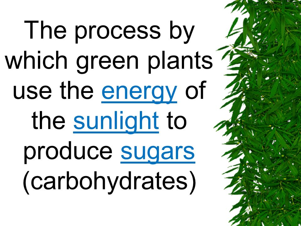 The process by which green plants use the energy of the sunlight to produce sugars (carbohydrates)