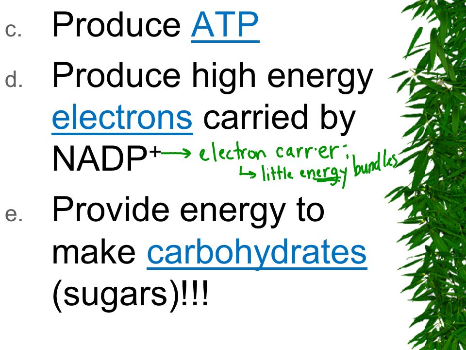 Produce ATP Produce high energy electrons carried by NADP+ Provide energy to make carbohydrates (sugars)!!!