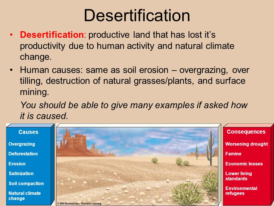 DesertificationDesertification: productive land that has lost it's productivity due to human activity and natural climate change.