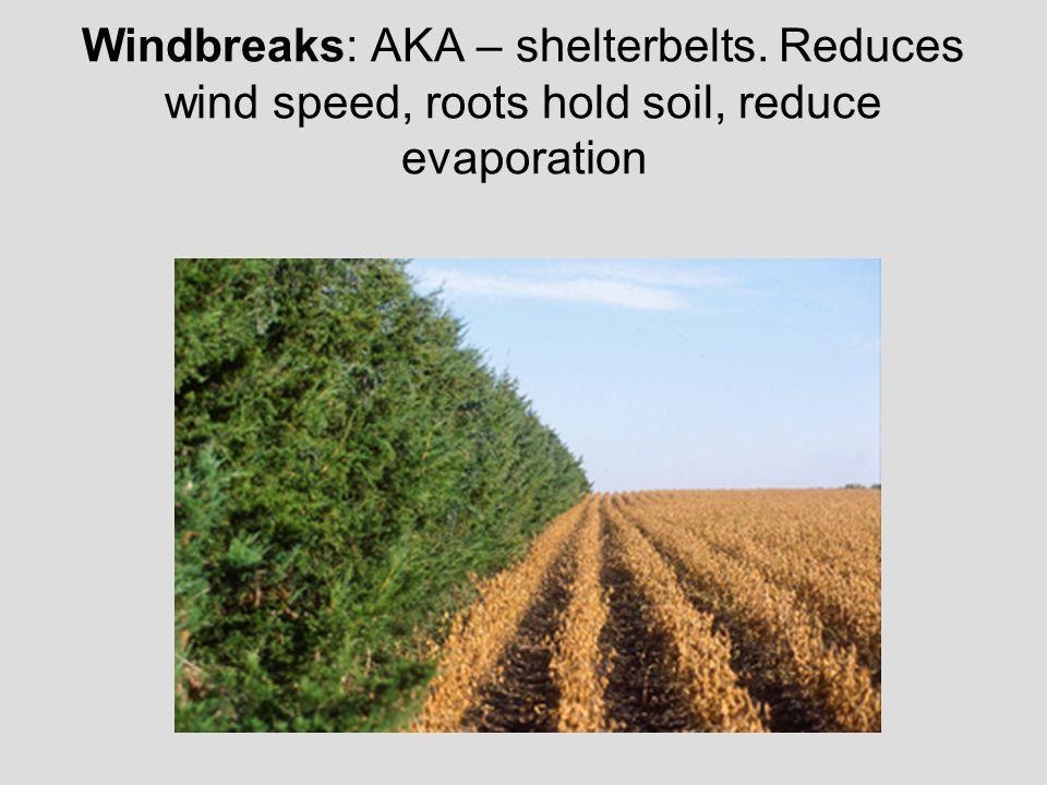 Windbreaks: AKA – shelterbelts