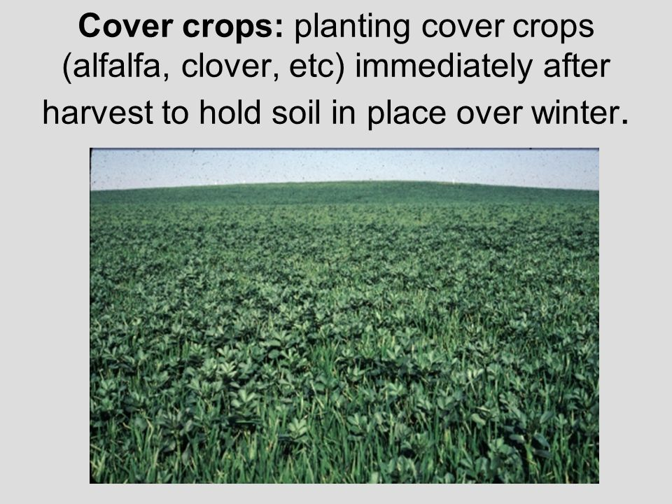 Cover crops: planting cover crops (alfalfa, clover, etc) immediately after harvest to hold soil in place over winter.