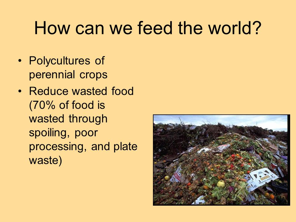 How can we feed the world