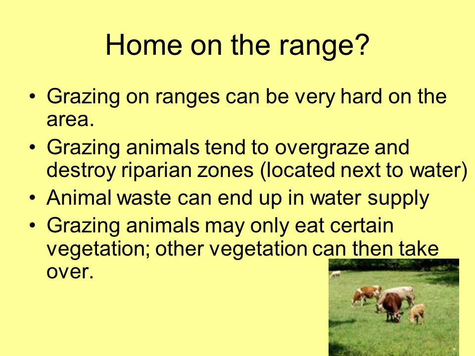 Home on the range Grazing on ranges can be very hard on the area.