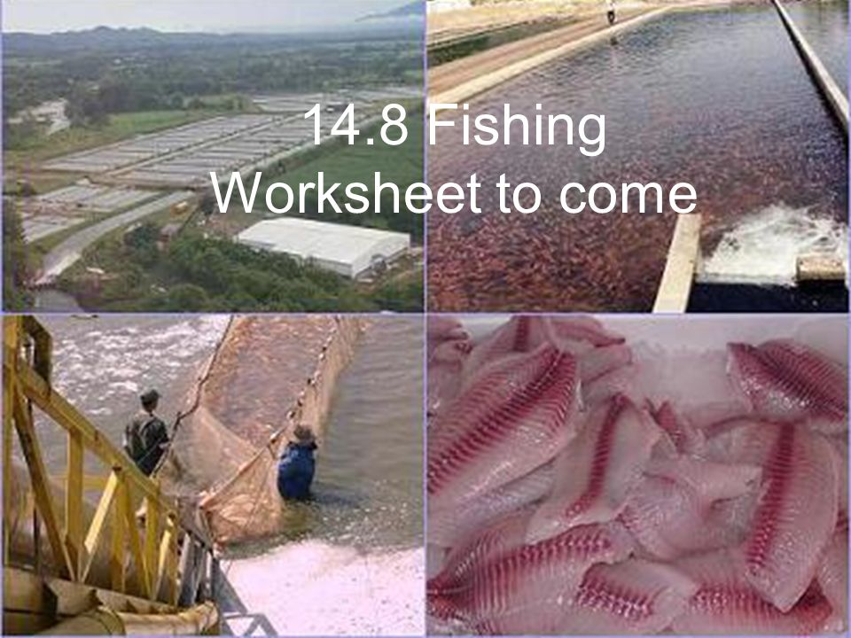 14.8 Fishing Worksheet to come