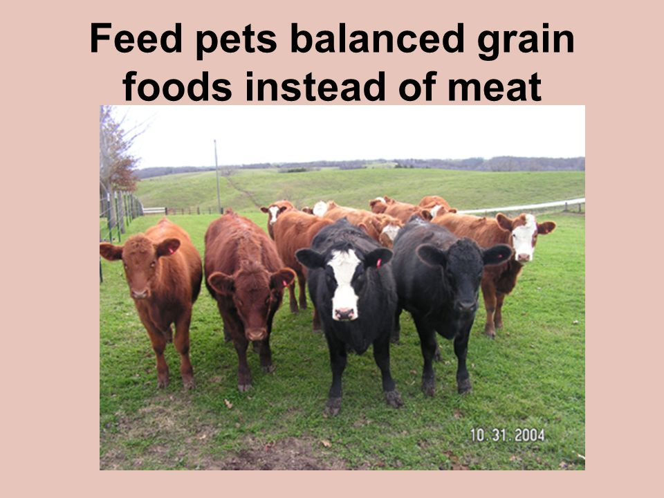 Feed pets balanced grain foods instead of meat