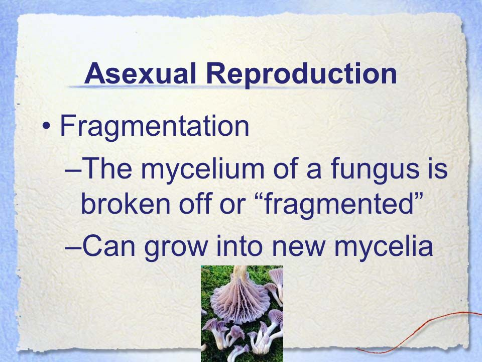 Asexual Reproduction Fragmentation.