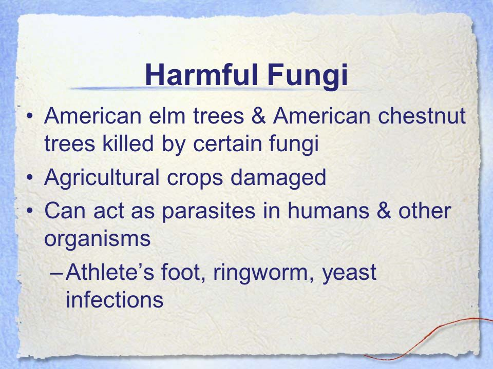 Harmful Fungi American elm trees & American chestnut trees killed by certain fungi. Agricultural crops damaged.
