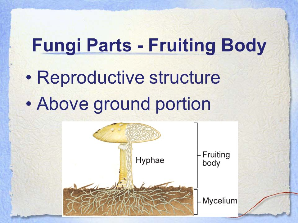 Fungi Parts - Fruiting Body