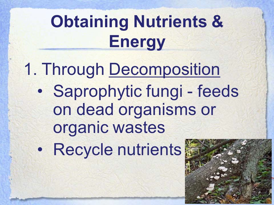 Obtaining Nutrients & Energy