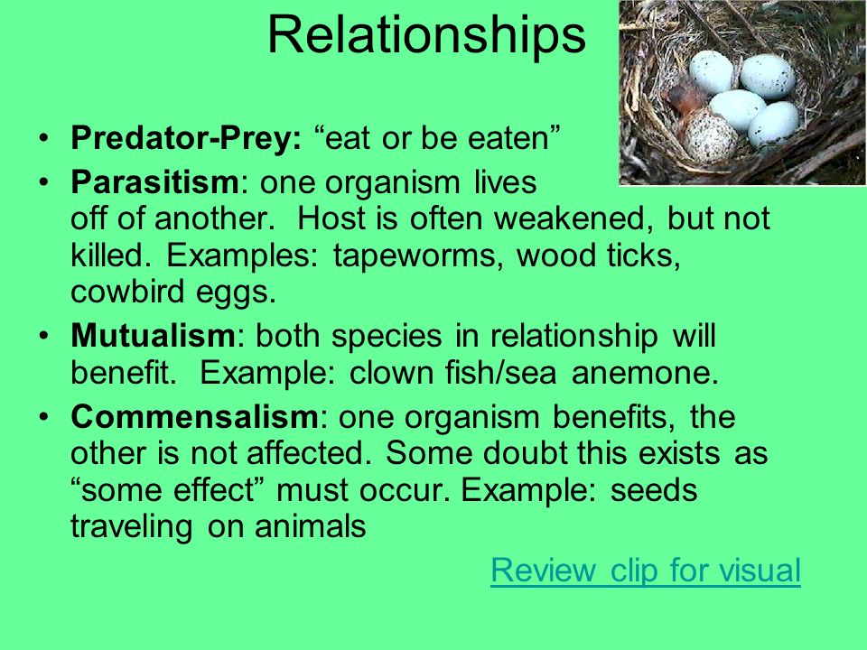 Relationships Predator-Prey: eat or be eaten