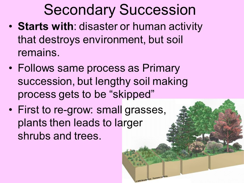Secondary Succession Starts with: disaster or human activity that destroys environment, but soil remains.