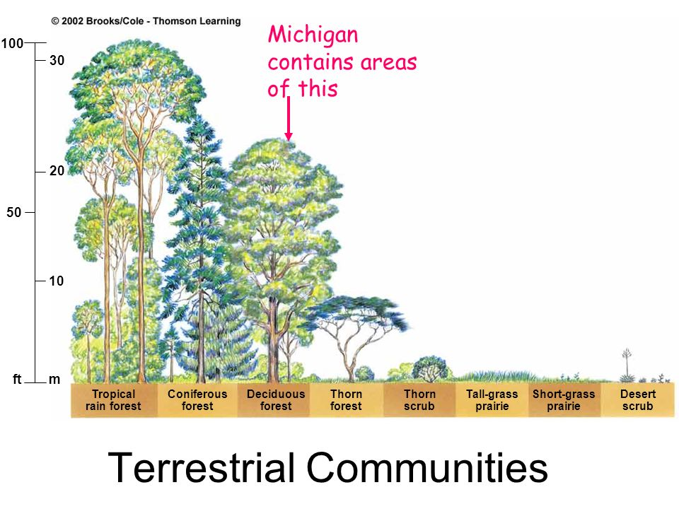 Terrestrial Communities