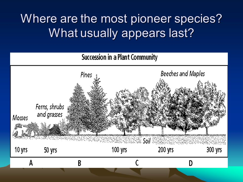 Where are the most pioneer species What usually appears last