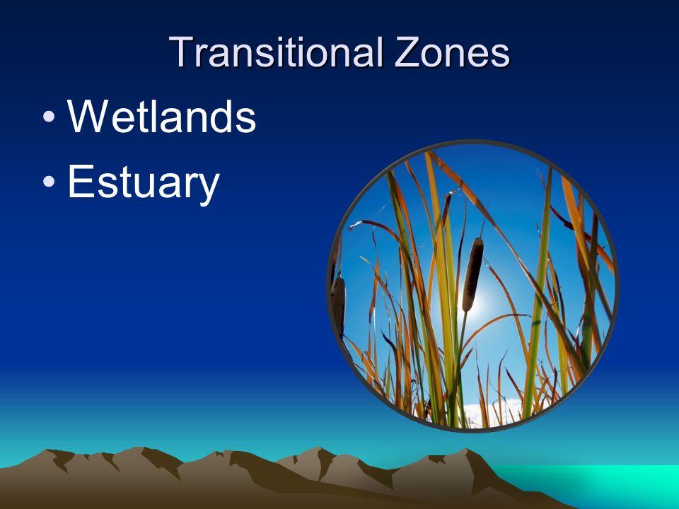 Transitional Zones Wetlands Estuary