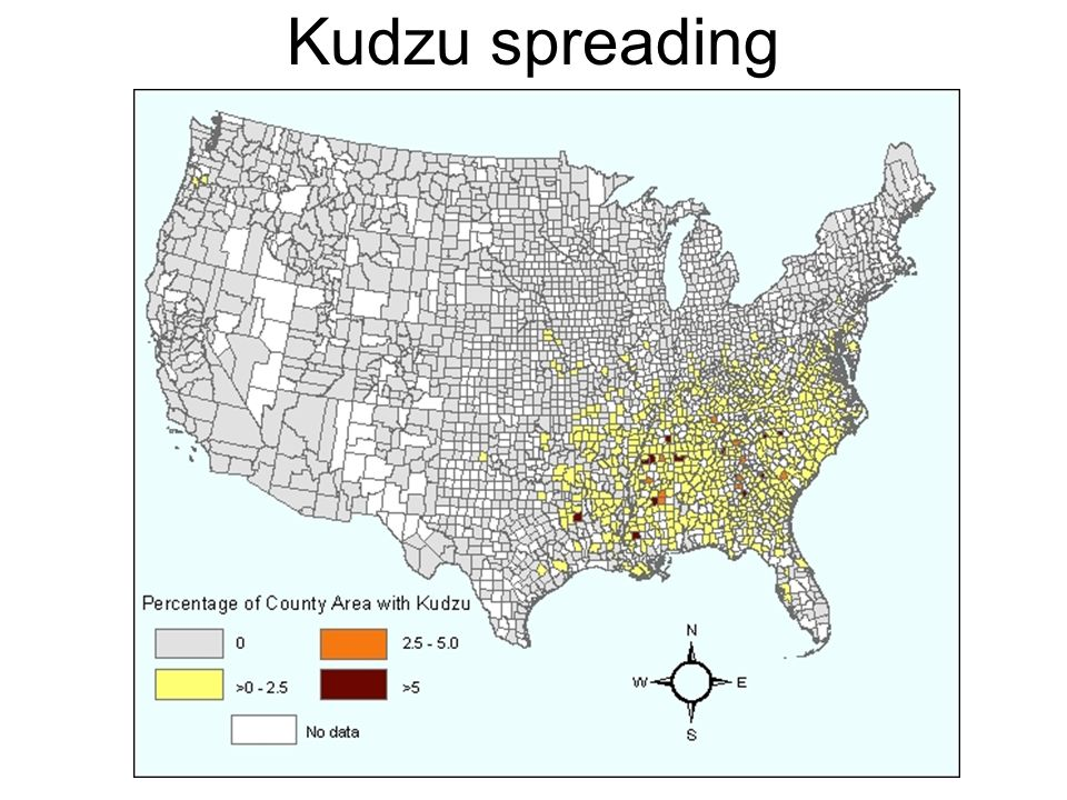Kudzu spreading