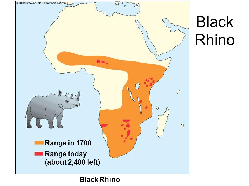 Black Rhino Range in 1700 Range today (about 2,400 left) Black Rhino