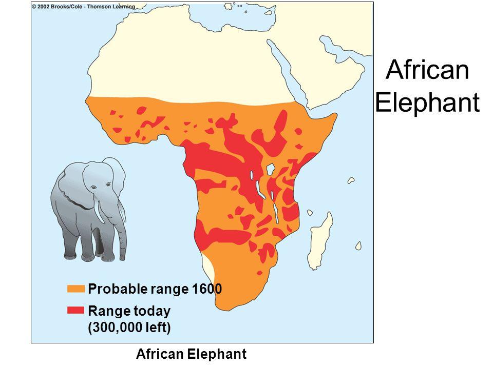 African Elephant Probable range 1600 Range today (300,000 left)