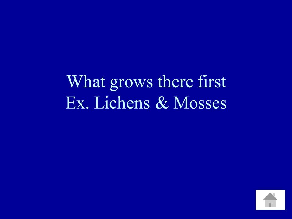 What grows there first Ex. Lichens & Mosses