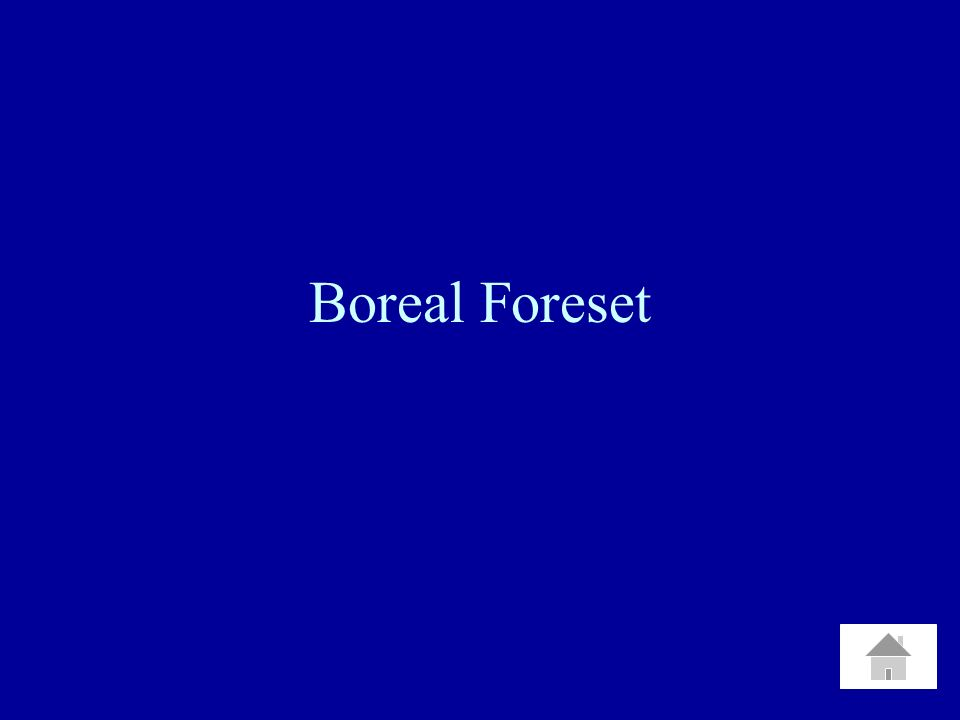 Boreal Foreset