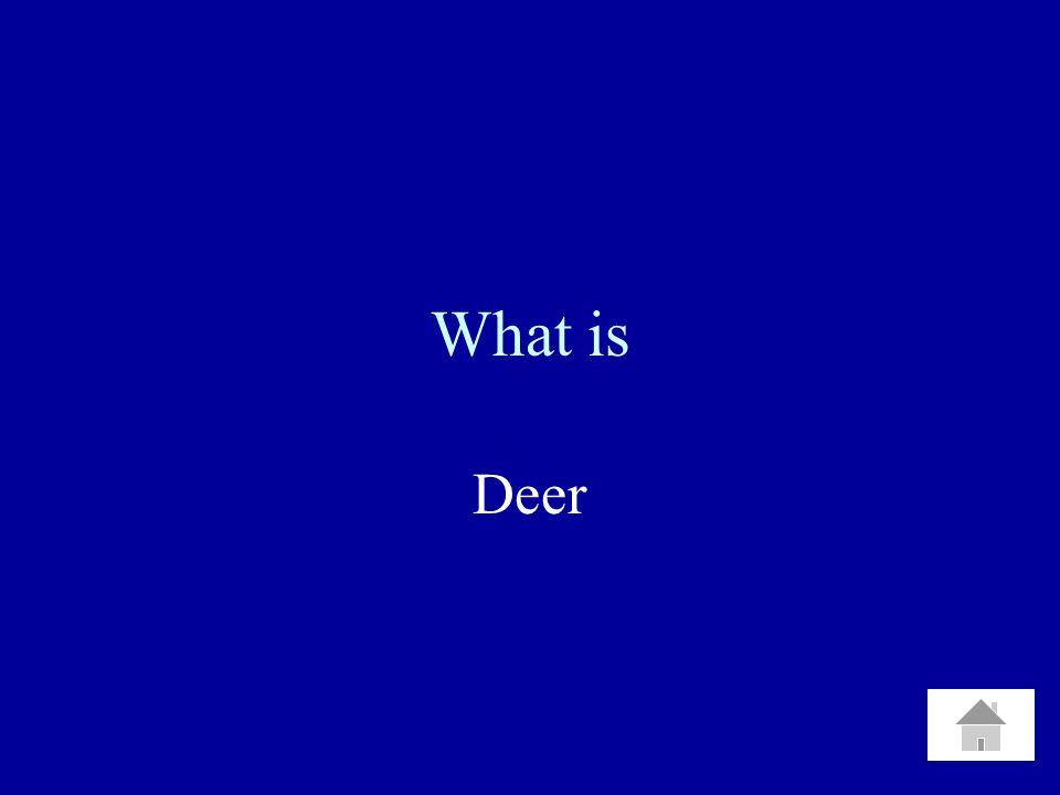 What is Deer