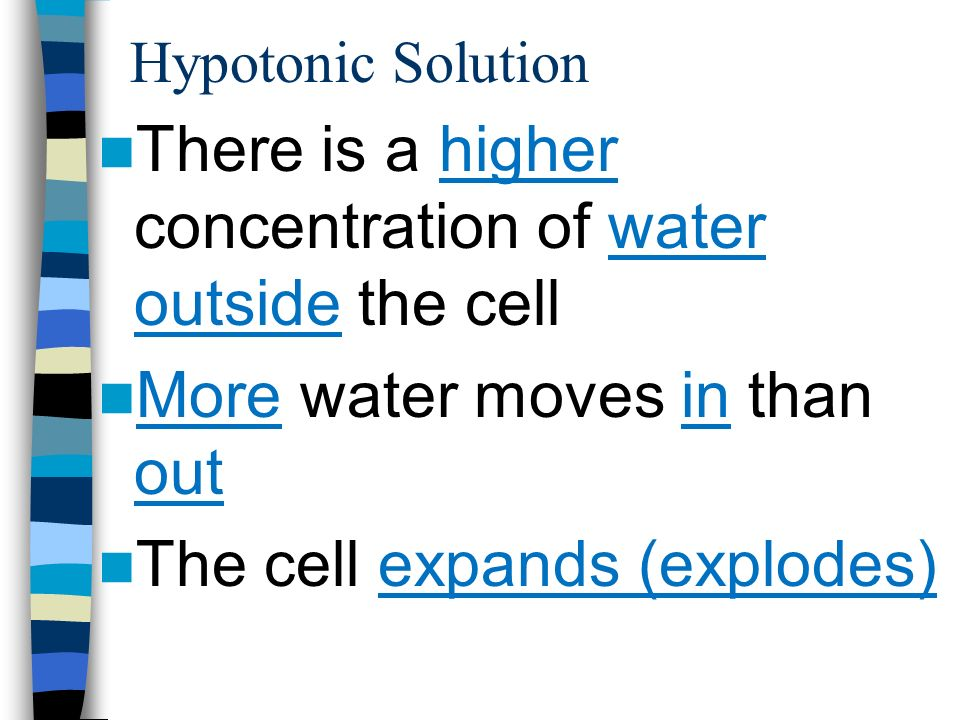 There is a higher concentration of water outside the cell