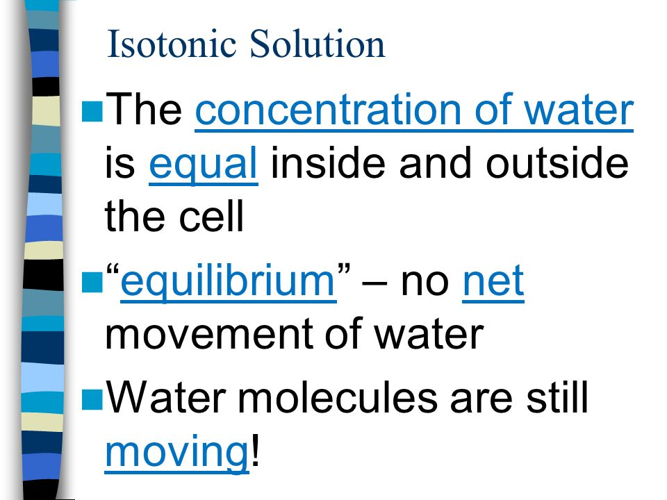 The concentration of water is equal inside and outside the cell