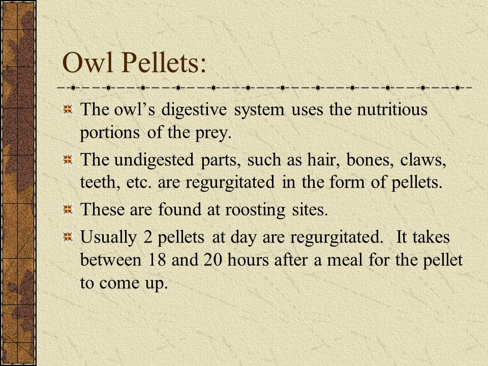 Owl Pellets: The owl's digestive system uses the nutritious portions of the prey.