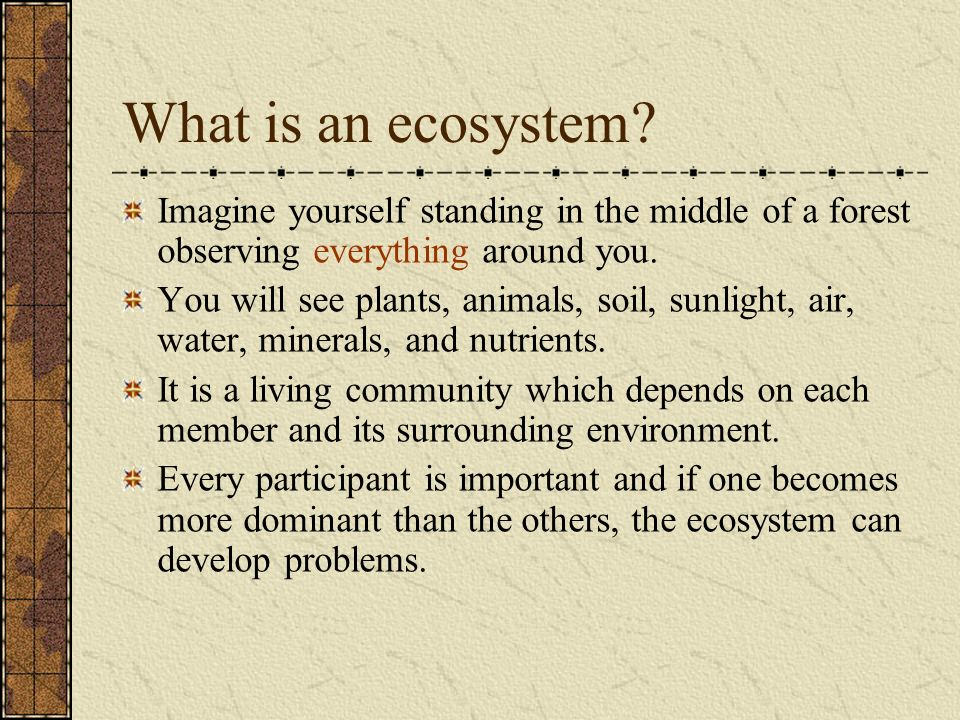 What is an ecosystem Imagine yourself standing in the middle of a forest observing everything around you.