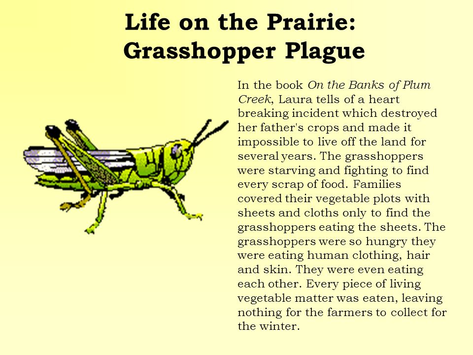 Life on the Prairie: Grasshopper Plague