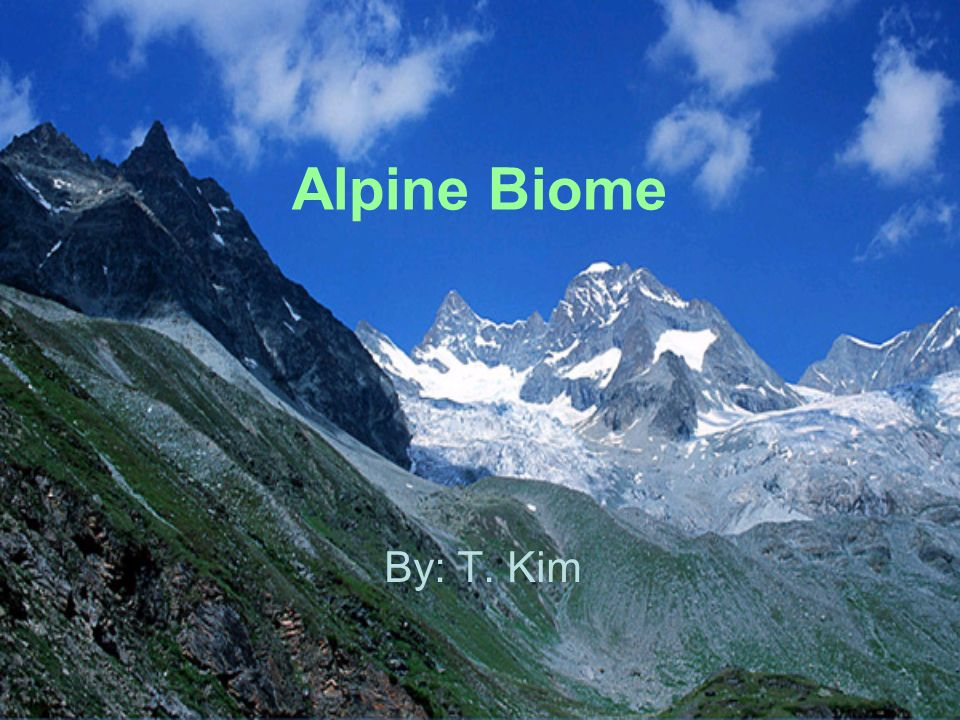 what is an alpine biome