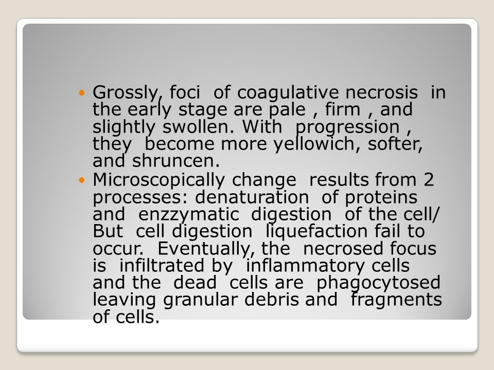 Grossly, foci of coagulative necrosis in the early stage are pale , firm , and slightly swollen. With progression , they become more yellowich, softer, and shruncen.