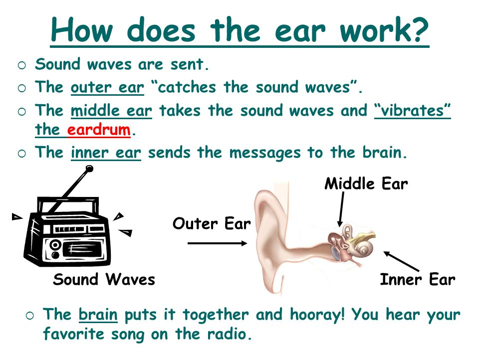 How does the ear work Sound waves are sent.