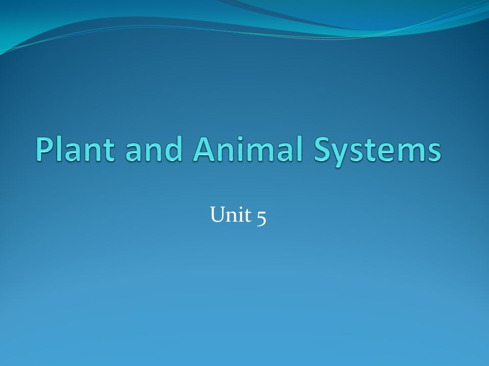 Plant and Animal Systems