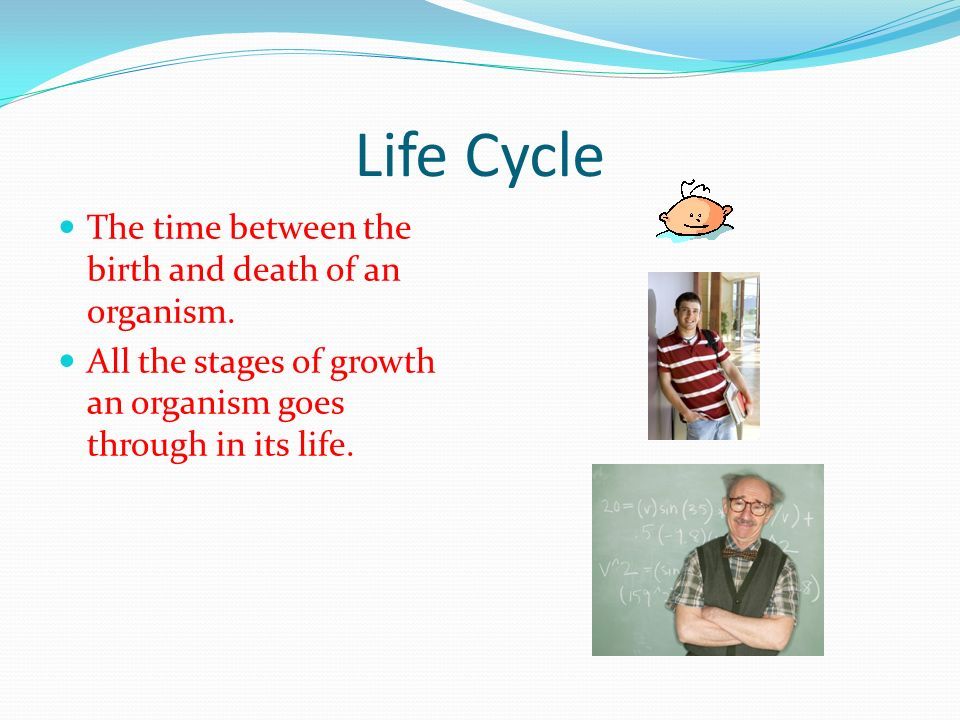Life Cycle The time between the birth and death of an organism.