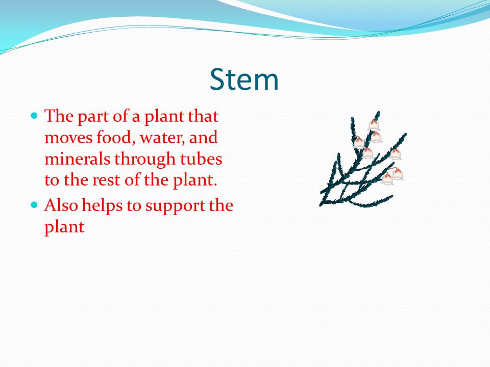 Stem The part of a plant that moves food, water, and minerals through tubes to the rest of the plant.