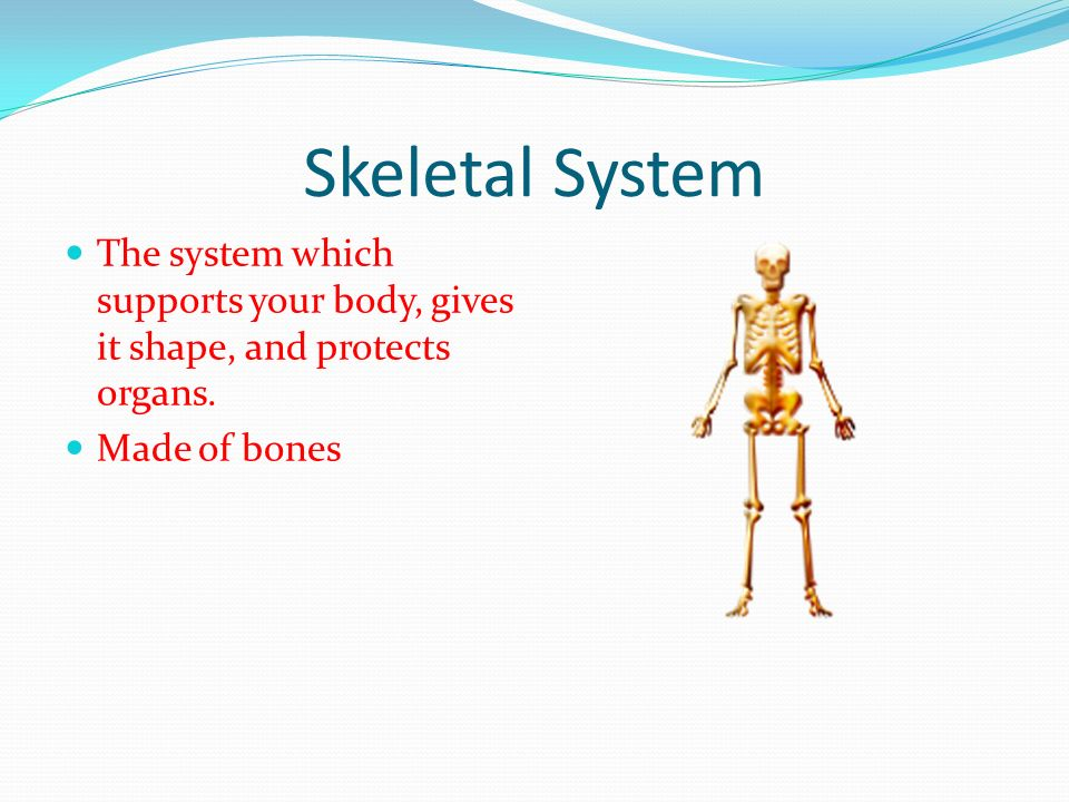 Skeletal System The system which supports your body, gives it shape, and protects organs.