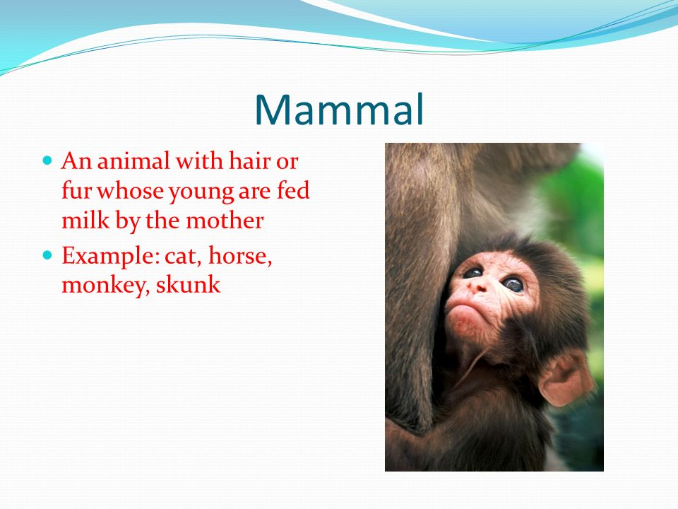 Mammal An animal with hair or fur whose young are fed milk by the mother.